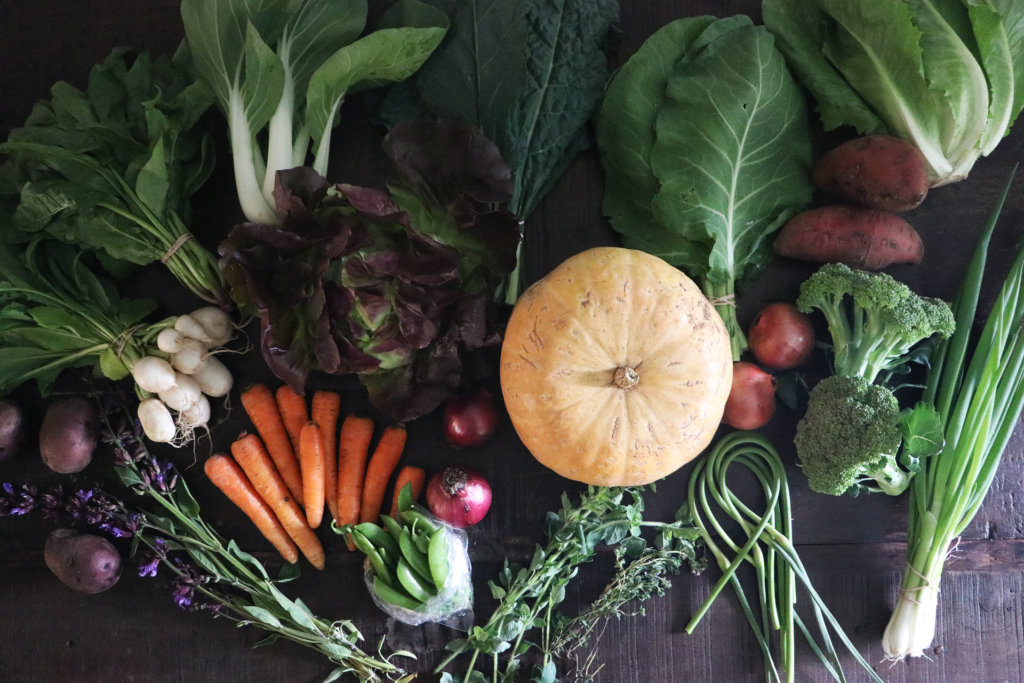 A table full of fresh farm vegetables.  Includes carrots, turnips, winter squash, butter lettuce, onions, snap peas, and more.